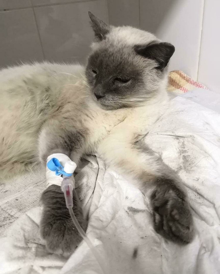 Надежда взяла кошку к себе домой. Фото: instagram.com/minivselennaya_v_macrocosmose