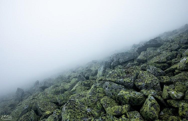 Один из склонов «Злой горы» покрыт каменными реками - «курумами». Фото: Олег Чегодаев