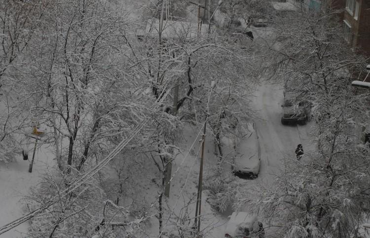 Снежная сказка во Владивостоке
