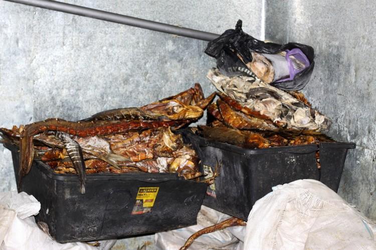 Изъяли свыше 15,5 тонны замороженной, копчёной и вяленой рыбы. Фото ГУ МВД по Астраханской области.