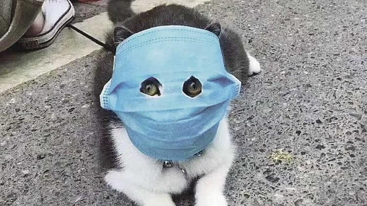 Китайский кот в медицинской маске стал звездой интернета. Фото: Соцсети.