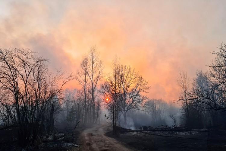 Сразу в 4 лесничествах вокруг бывшей Чернобыльской АЭС горит лес и трава