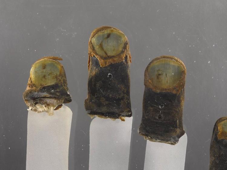 Замороженные пальцы майора Бронко. Фото: twitter.com/museum_owl