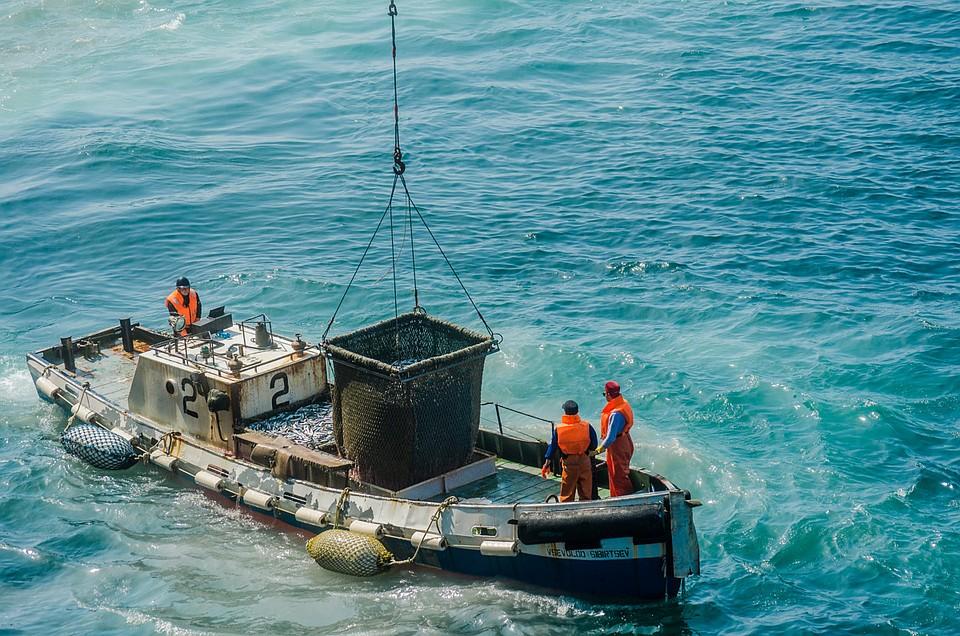 Мотоботы передают рыбу. Фото: Ксения ТРЕТЕЛЬНИЦКАЯ