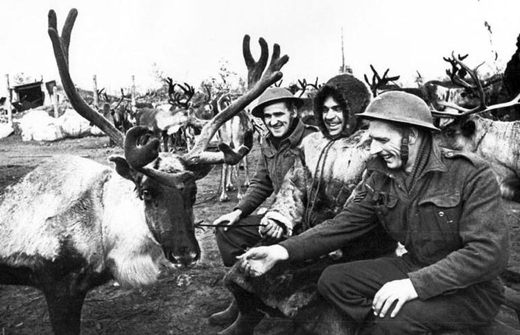 Одной из задач оленных частей являлась эвакуация раненых, которых подбирали в радиусе до десяти километров от полевого медпункта. На оленях во время войны с линии фронта и из тыла противника было вывезено 10142 раненых солдата.