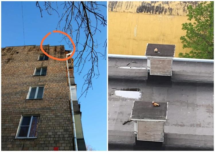 В Ясенево по крышам гуляют утки.