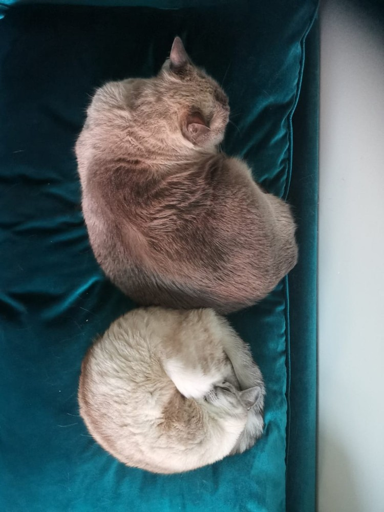 Ветеринары говорят, что вес кота аномальный, они хотят увидеть его вживую. Фото: личный архив.