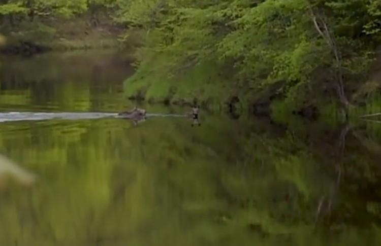 Пока люди еще только мечтают о пляже, лоси уже вовсю купаются. ФОТО: Андрей Грибов.