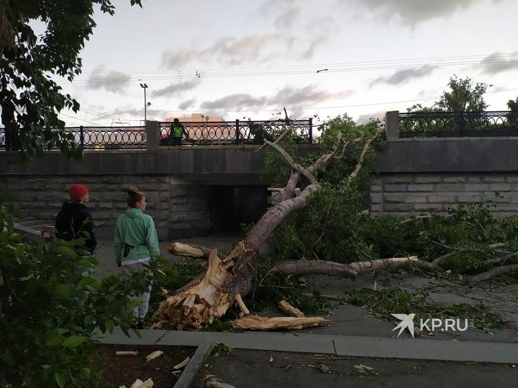Упавшие деревья будут убирать коммунальные службы