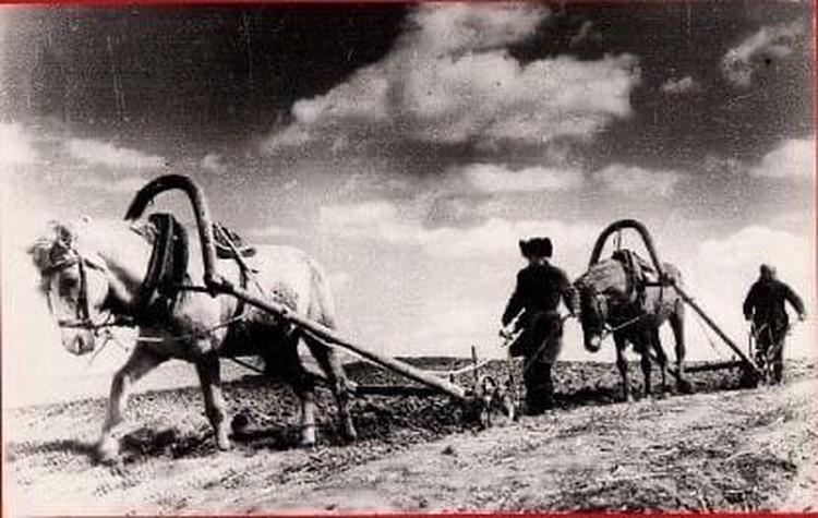 Фото: Архив СЗАО «СКВО»