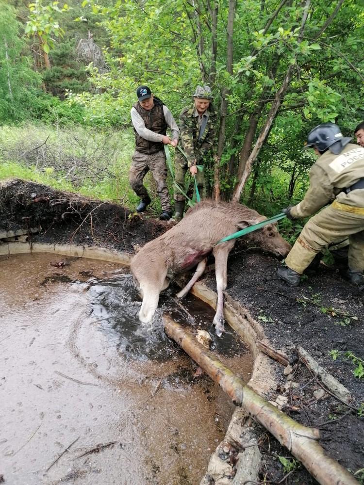 Крики лосенка из леса услышали в городе. Фото: пресс-служба ГУ МЧС по Свердловской области.