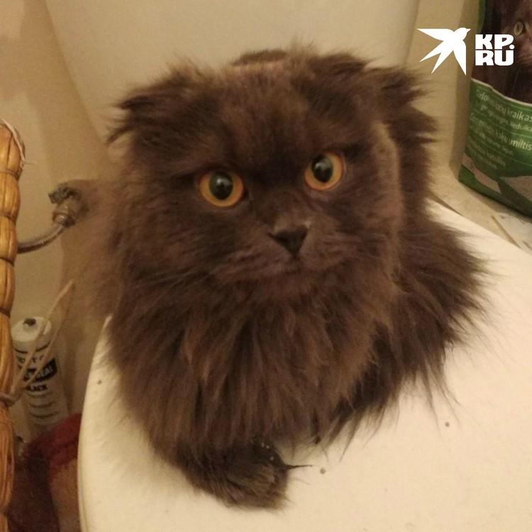 Так котик выглядит сейчас
