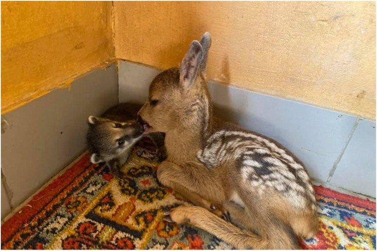Малыши очень дружны. Фото: Парк миниатюр | Бахчисарай/VK