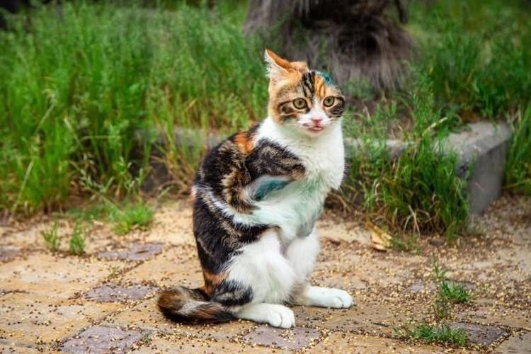 Лаки нежная и ласковая кошка