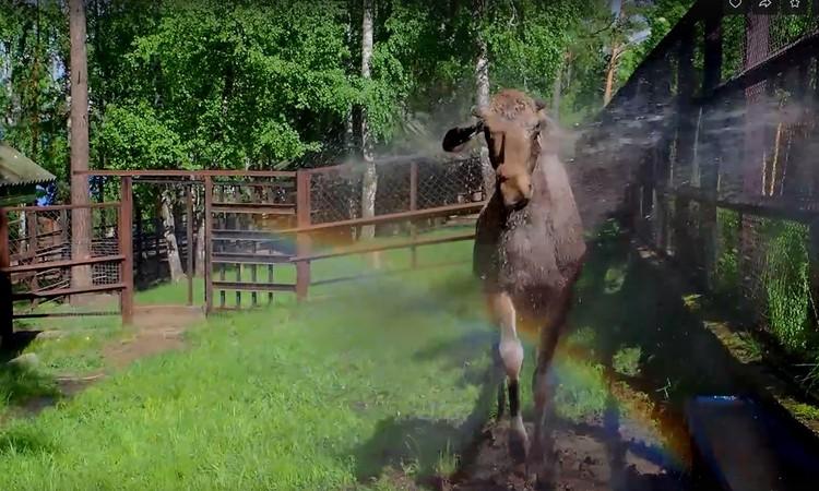 Маленькое чудо: бежим на радугу. Фото: стоп-кадр Роев ручей.