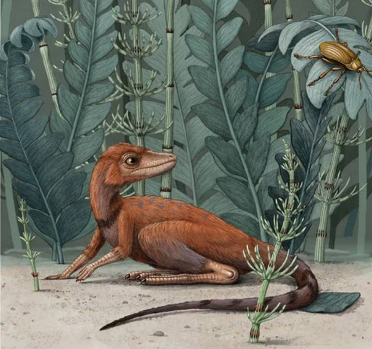 """""""Истребитель насекомых"""" охотился в основном на жуков триассового периода мезозойской эры."""