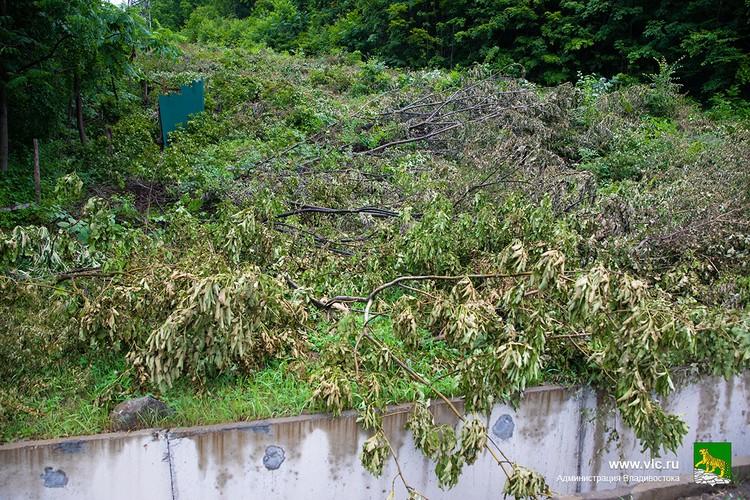 Мэрия Владивостока разрешения на вырубку деревьев на этом участке не выдавала. Фото: сайт администрации Владивостока