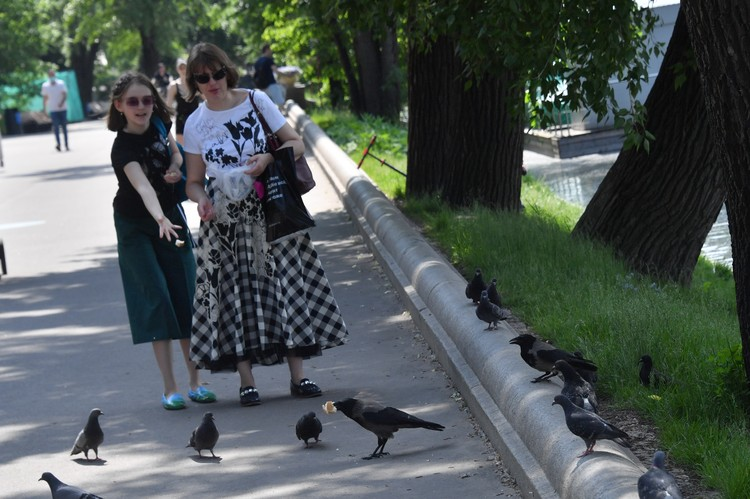 У голубей множество других своих болезней и паразитов.