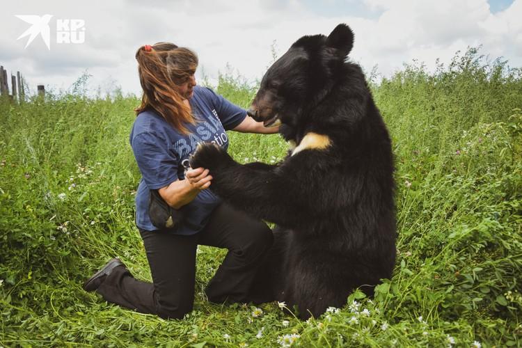 Майя занимается с медведями, чтобы не забывали цирковую программу.