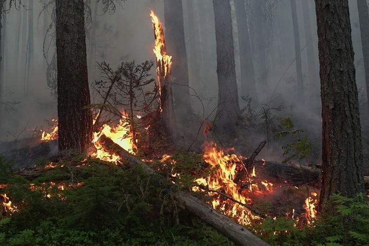 В последний раз такой лесной пожар в заповеднике был в 2010 году. Фото: пресс-служба заповедника «Денежкин Камень»