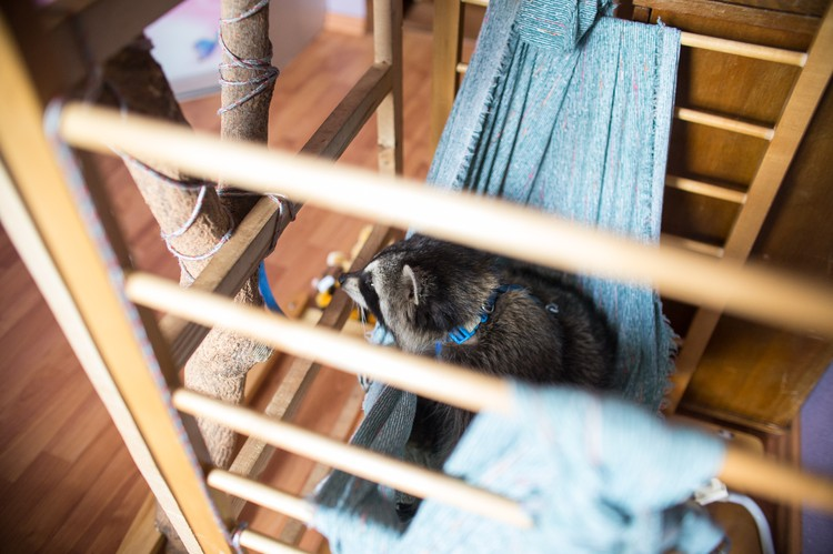 А это Печенькин домик с гамаком, сделанный из старой детской кроватки.