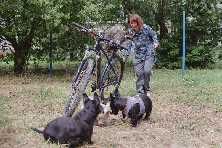 Собак не пришлось приучать к поездкам на велосипеде. А кошек обучали несколько недель.