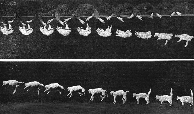 Фазы падения кошки: подобную съемку придумал Майбридж. Фото: Этьен-Жюль Маре/ru.wikipedia.org
