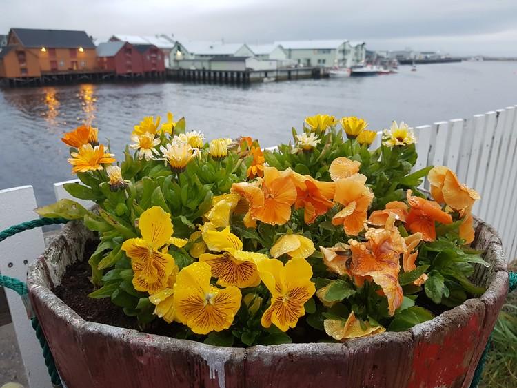 Цветы в заполярном порту. Это даже трогательнее, чем единственная в городе рябинка, которую укутывают на зиму.