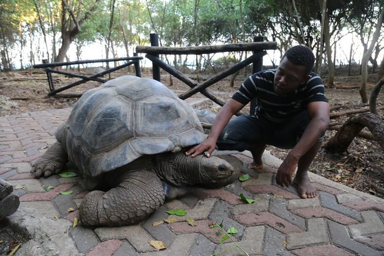 Достопримечательности на Занзибаре в основном природные