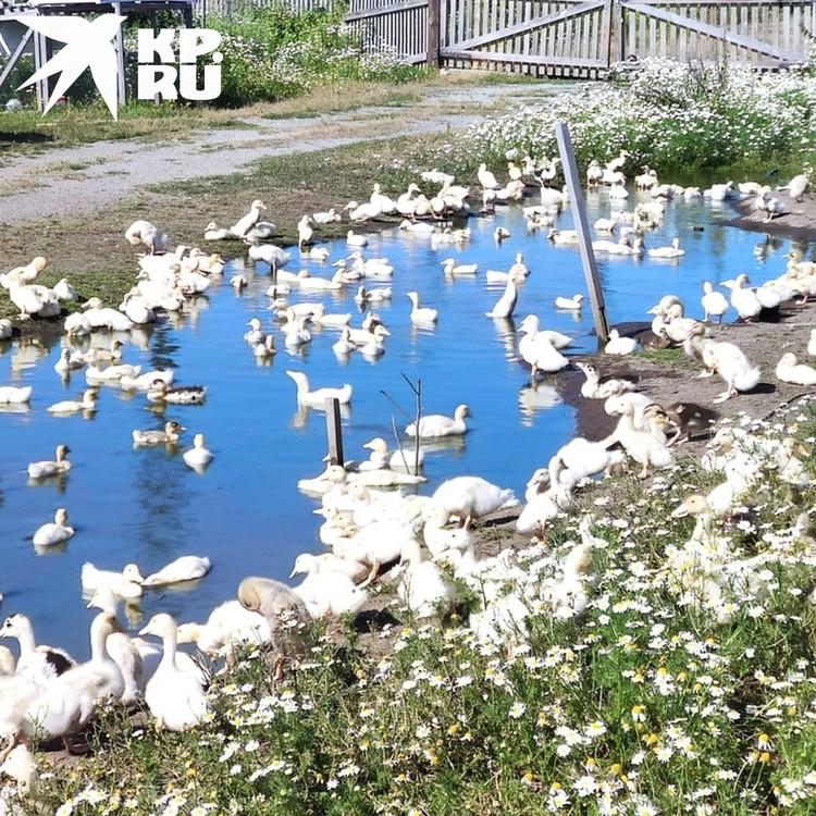 Хозяйство сибиряка находится в селе Плотниково. Фото: личный архив.