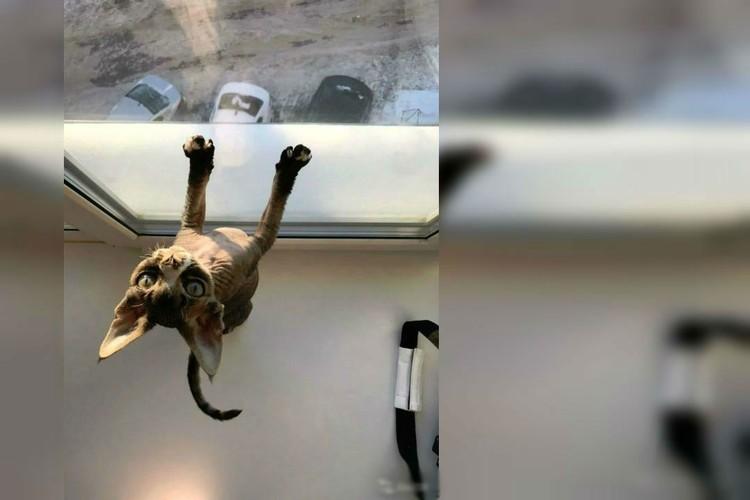 Такие оригинальные животные скорее «на любителя». Фото: avito.ru