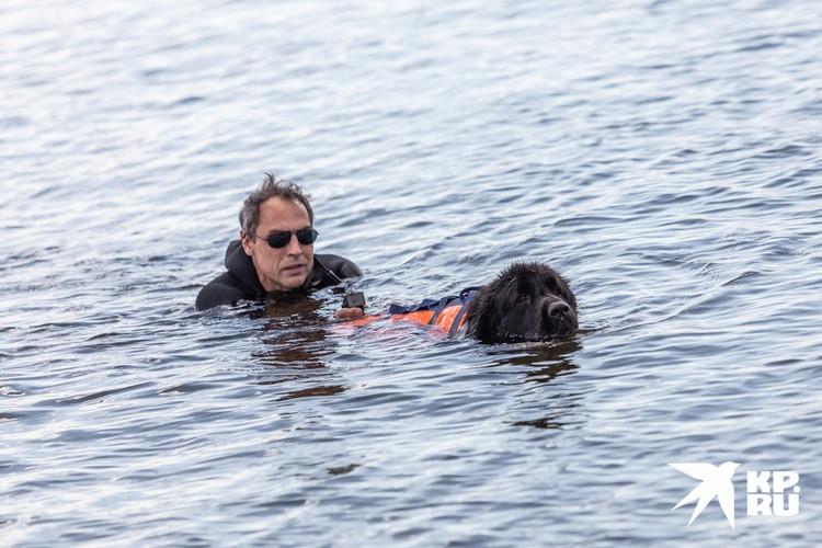 Утопающий может ухватиться за жилет пса и животное поплывет к берегу.