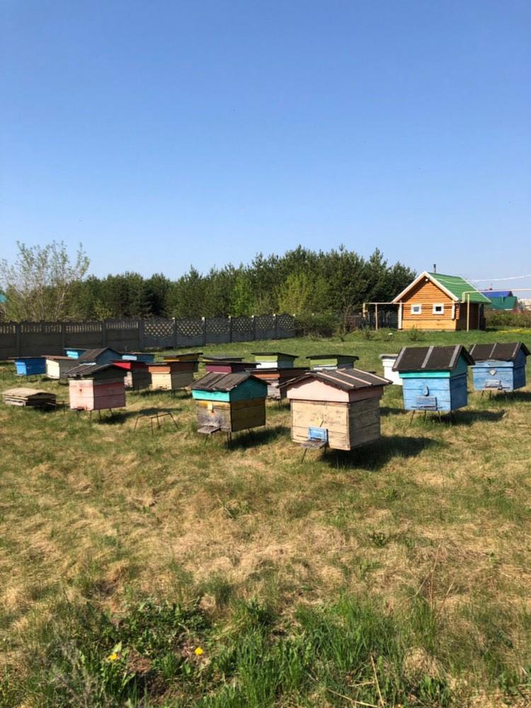 Вячеслав Комиссаров также практикует апитерапию – самодостаточный метод оздоровления и лечения организма, в котором используются продукты пчеловодства. Фото: личный архив