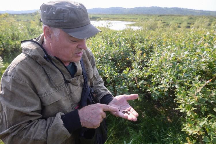 """Грызунов приманивают кедровыми орешками, смоченными в рыжиковом масле. Фото предоставлено компанией """"Норникель"""""""