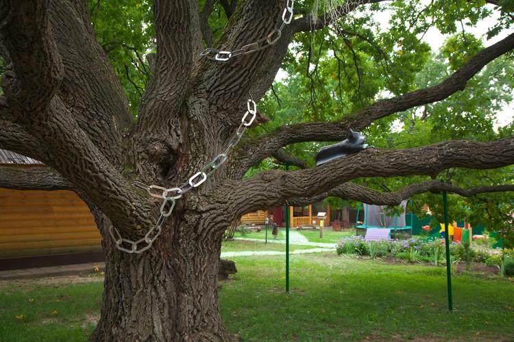 А здесь в ветвях сидит кот. Фото: Андрей Ларионов