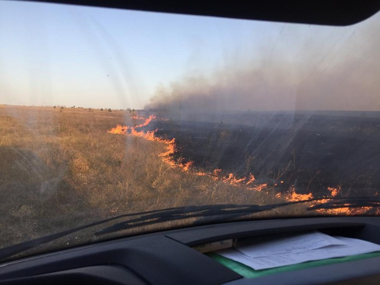 В полях горела сухая трава. Фото: ГУ МЧС по РО