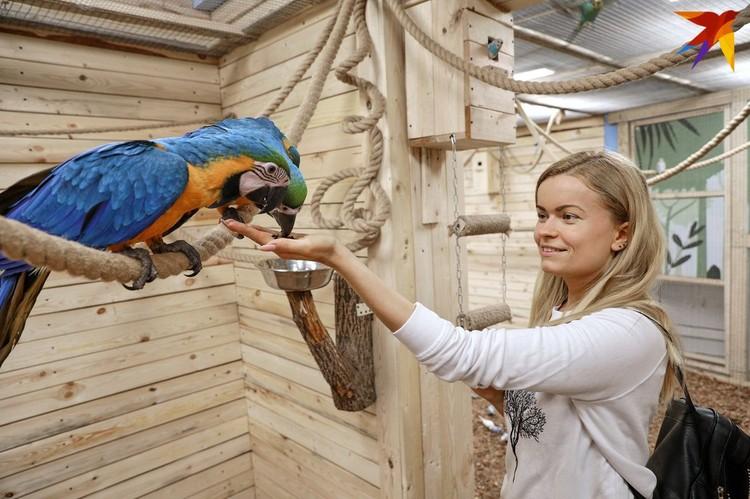 Первое знакомство с птицами.