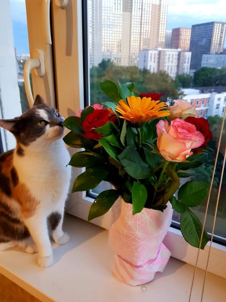 Кошка Галина Алексеевна – домашний питомец Алексея. Фото предоставлено героем.
