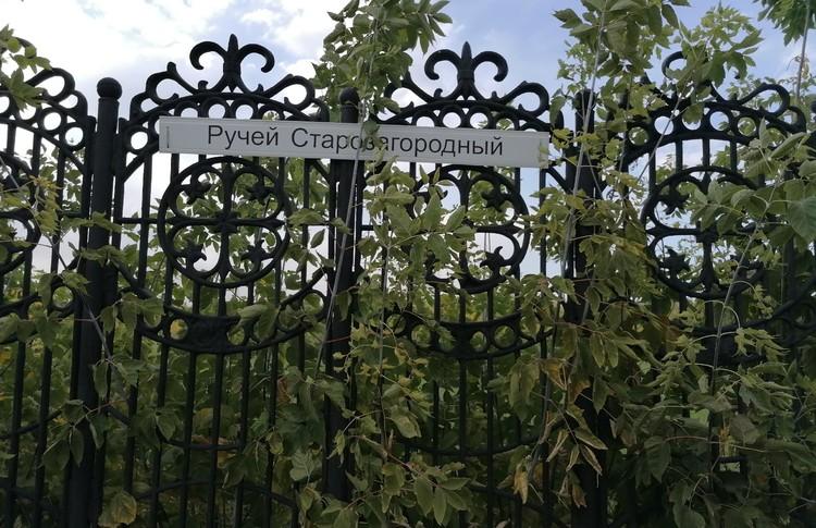 Снять статус памятника природы пытаются с участка между улицами Красный Путь и Березовая.