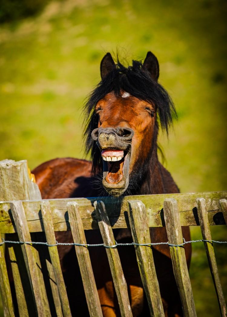 """""""Весёлая лошадь"""". Автор: Daniel Szumalis. Фото предоставлено организаторами конкурса"""