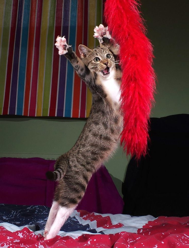 """Танцы котёнка"". Автор: Iain Mcconnell. Фото предоставлено организаторами конкурса"