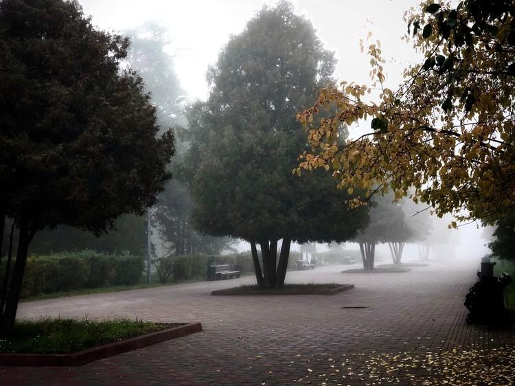 В парке Гагарина туман выглядит весьма аутентично Фото: Парк Гагарина/vk.com