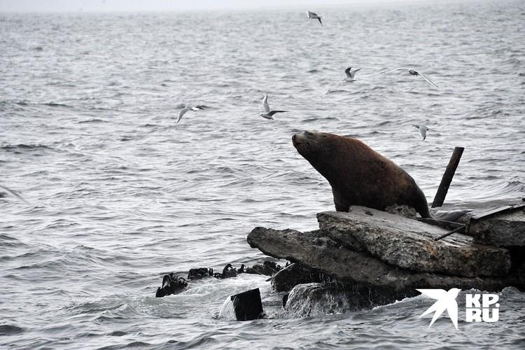 Морские млекопитающие и птицы не пострадали