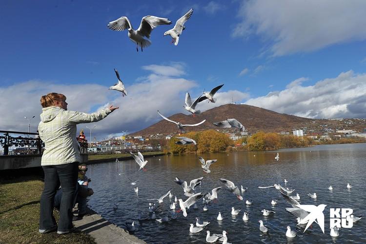 Численность и распределение птиц соответствует сезону.