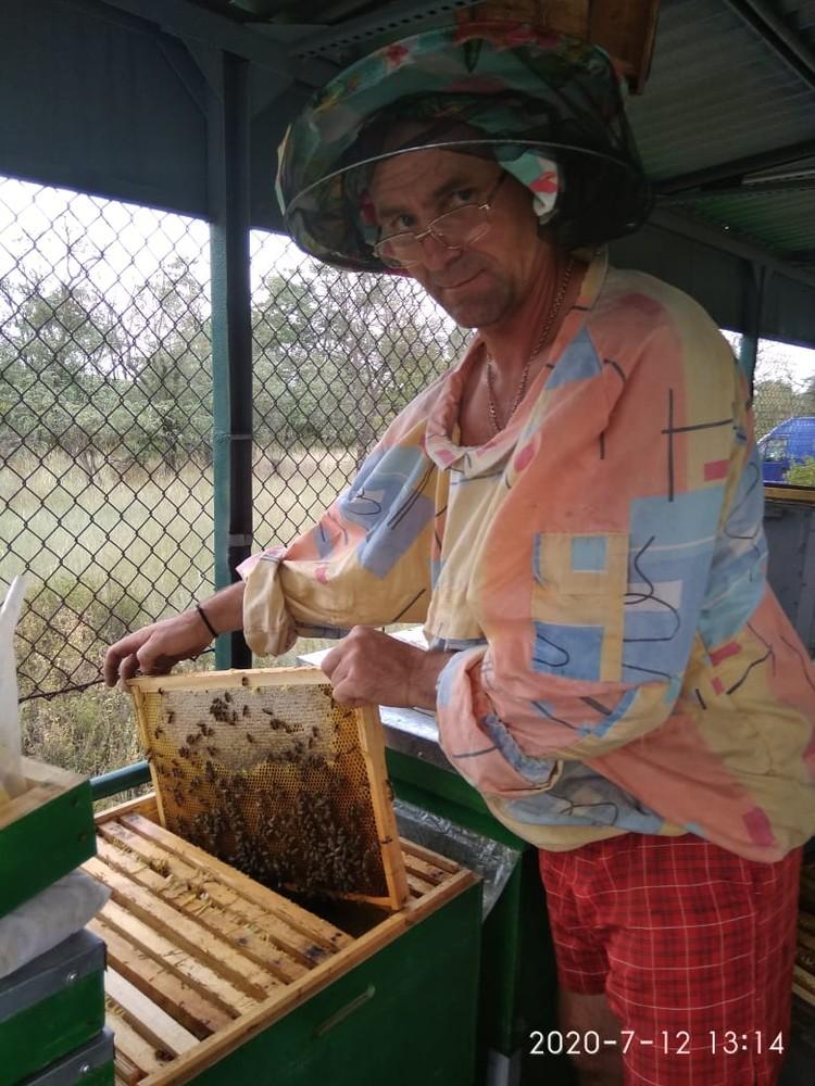 Сергей Кравченко и его пчелы.