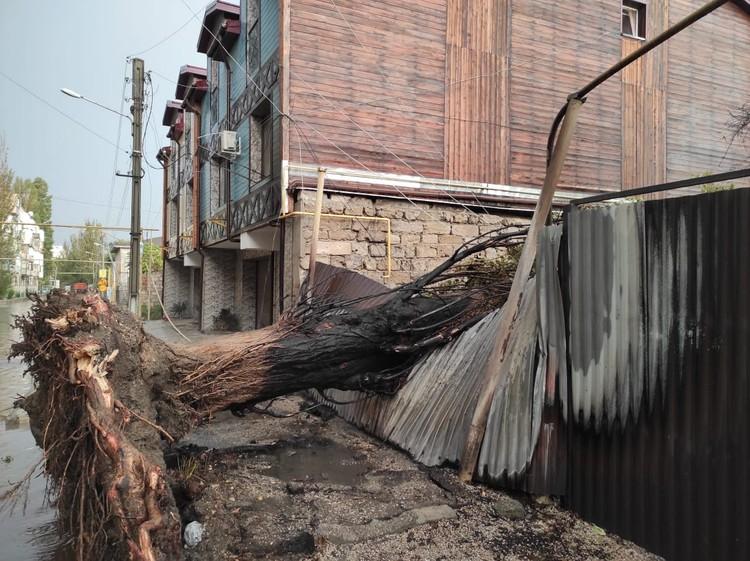 """Дерево упало на газовую трубу после удара молнии. Фото: источник """"КП"""""""