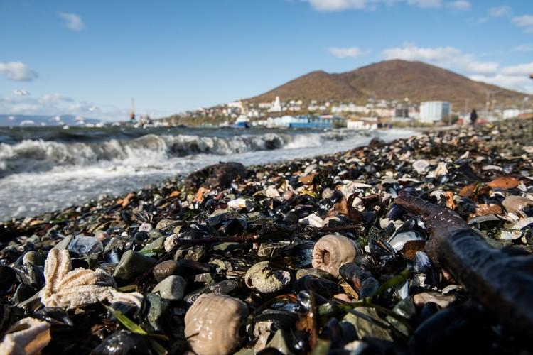 Сразу после публикации фотографий с мертвыми морскими животными, появились и многочисленные версии причины произошедшего.