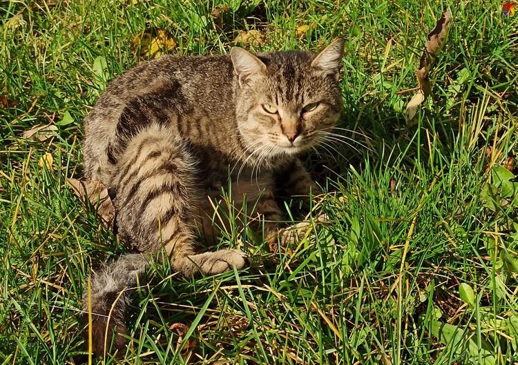 Наталья и Артем подкармливают и лечат уличных котов. Некоторых оставляют у себя дома.