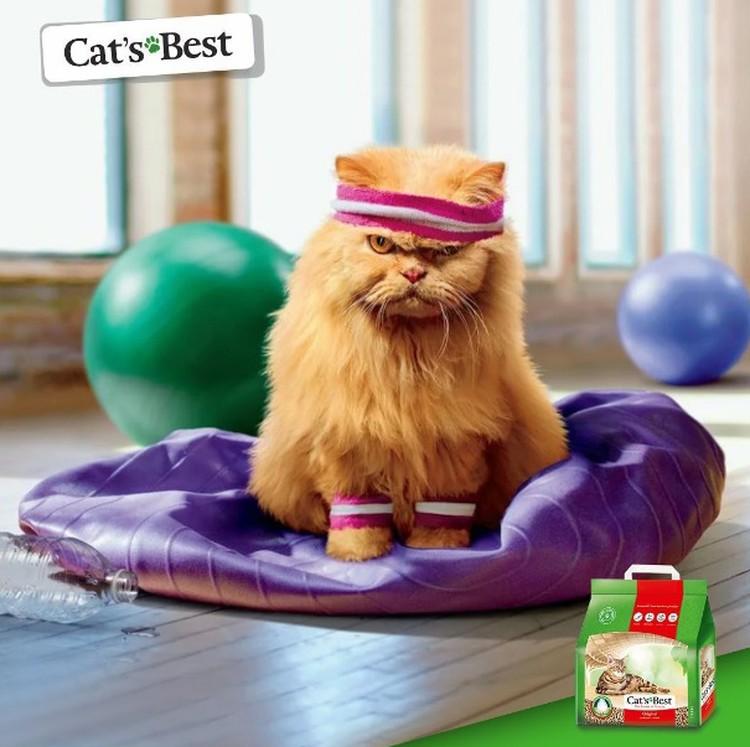 Комкующийся древесный наполнитель Cat's Best, гарантия чистоты, комфорта и гигиены Вашего питомца и жилища.