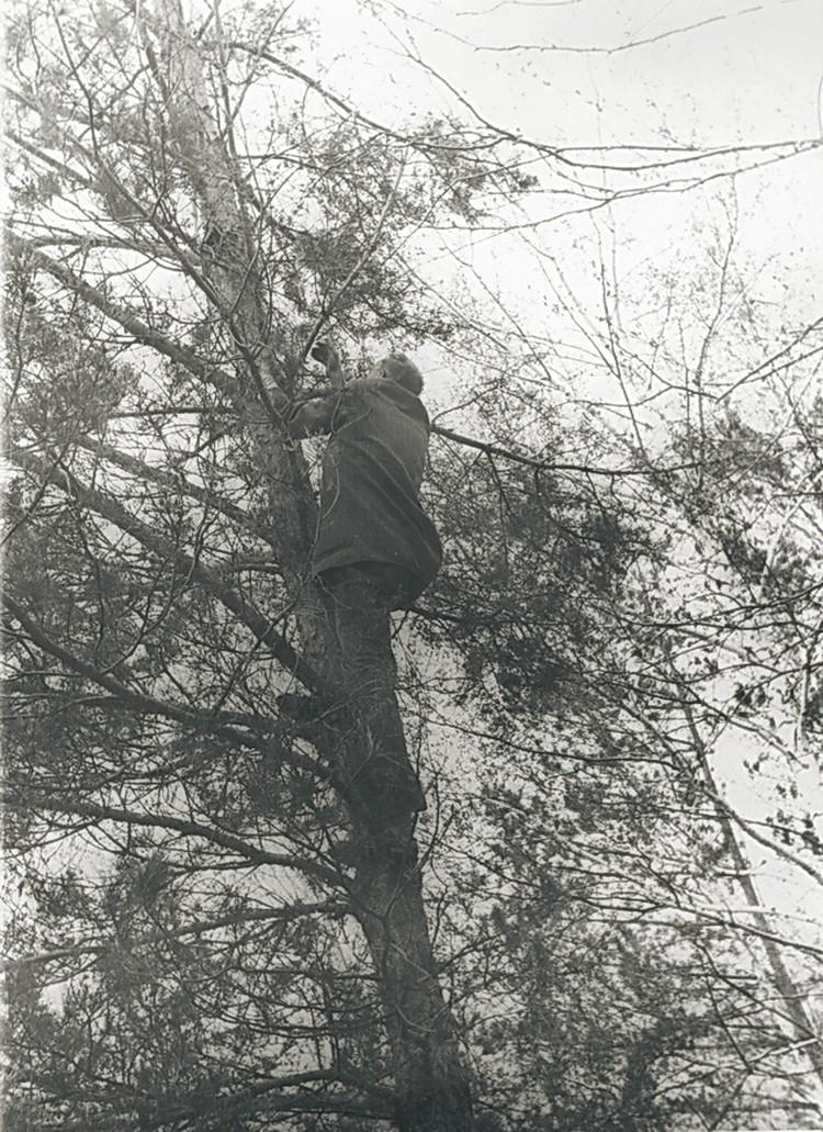 Михаил Лаврентьев лезет на дерево, чтобы посмотреть, где именно начать строительство. Фото: предоставлено Музеем города Новосибирска.